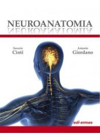 Neuroanatomia di Cinti, Giordano