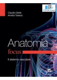 focus anatomia.