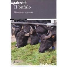 Bufalo di Ernesto Correale
