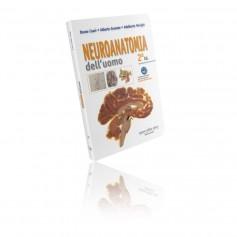 Neuroanatomia dell'Uomo di Cozzi