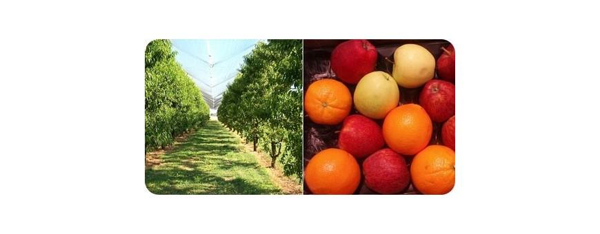 Coltivazioni Arboree e Fruttico