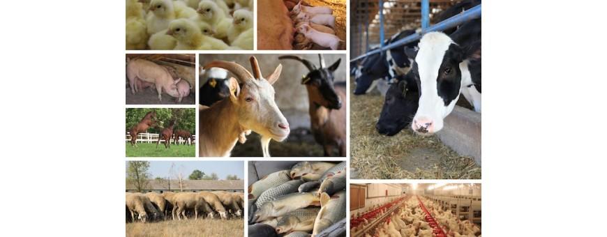 Zootecnia e Nutrizione Animale
