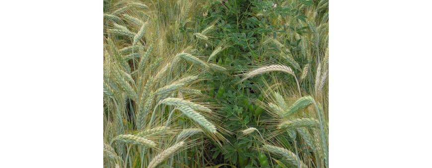 Agronomia e Coltivazioni Erbace