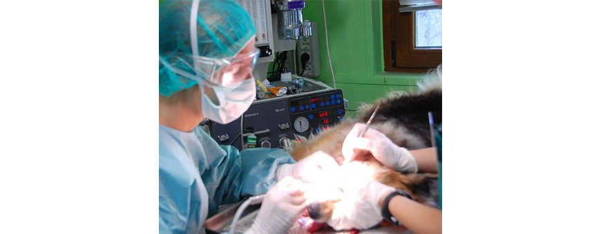Veterinaria - Chirurgia
