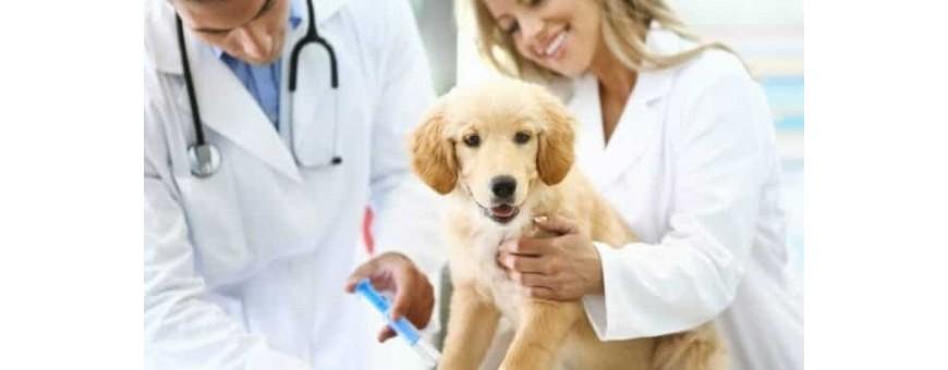 Veterinaria - Medicina Veterinaria
