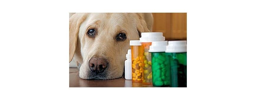 Veterinaria - Farmacologia e Terapia