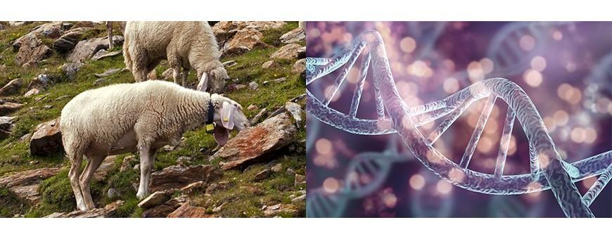 Veterinaria - Genetica